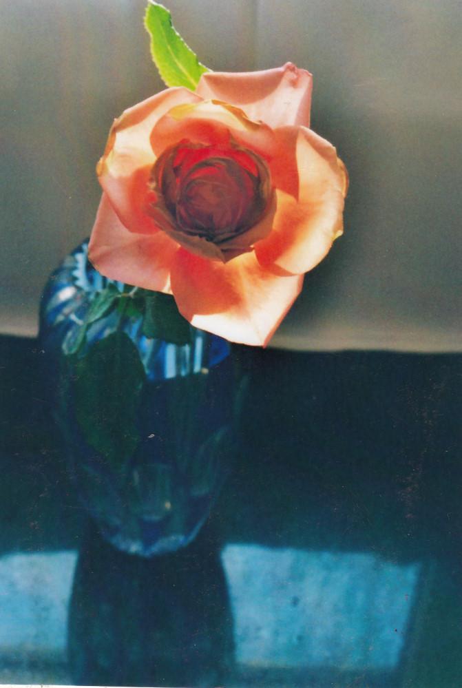 Rose, 2012