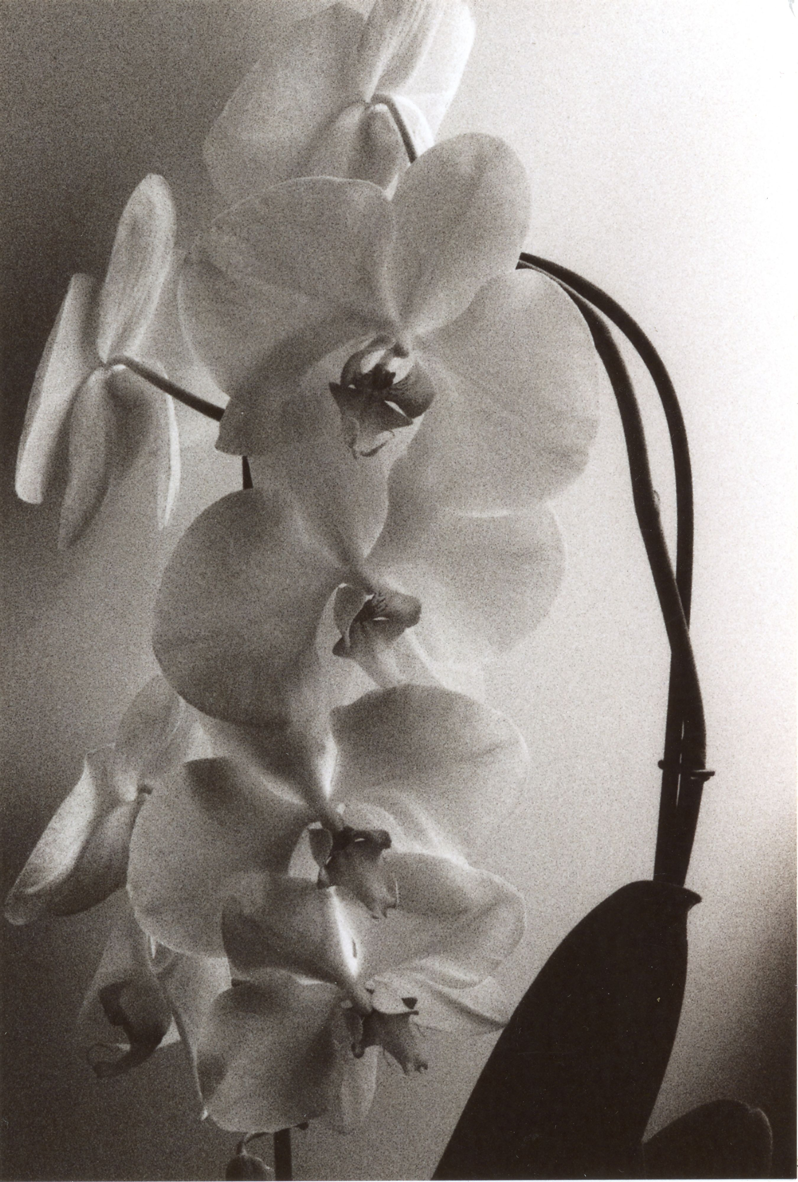 Orchidee, 2018